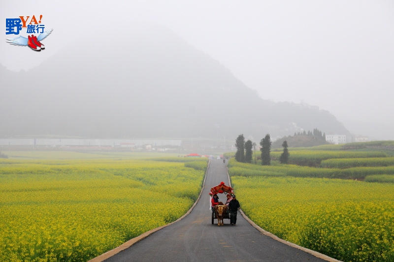 愛之聖地金色羅平-雲南羅平油菜花海 @YA 野旅行-旅行不需要理由