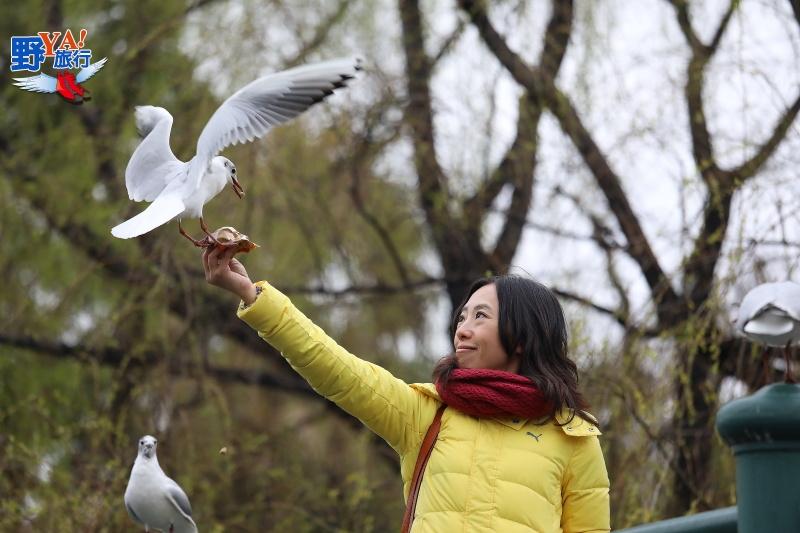 彩雲之南季節限定-昆明翠湖公園紅嘴鷗 @YA 野旅行-旅行不需要理由