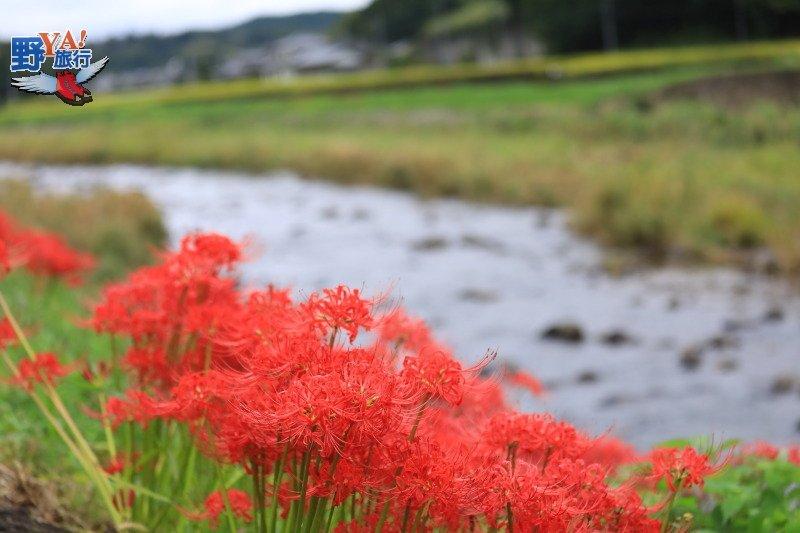 日本鄉下農泊體驗 不懂日文嘛ㄟ通 @YA 野旅行-旅行不需要理由