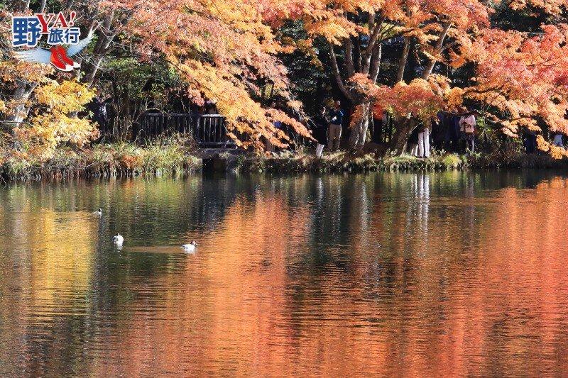輕井澤老街散策 雲場池浪漫秋楓 @YA 野旅行-旅行不需要理由