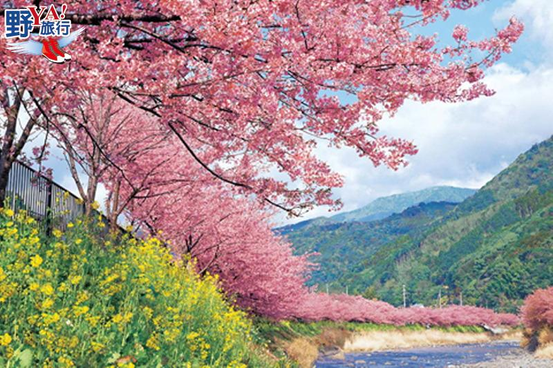 日本最早開的櫻花 2018河津櫻花祭浪漫登場 @YA 野旅行-旅行不需要理由