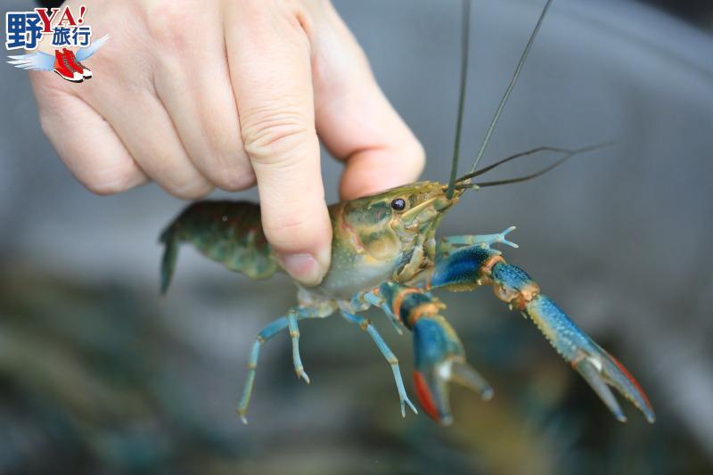 花蓮食農教育體驗- 壽豐休閒農業區有機百合淡水龍蝦 @YA 野旅行-旅行不需要理由