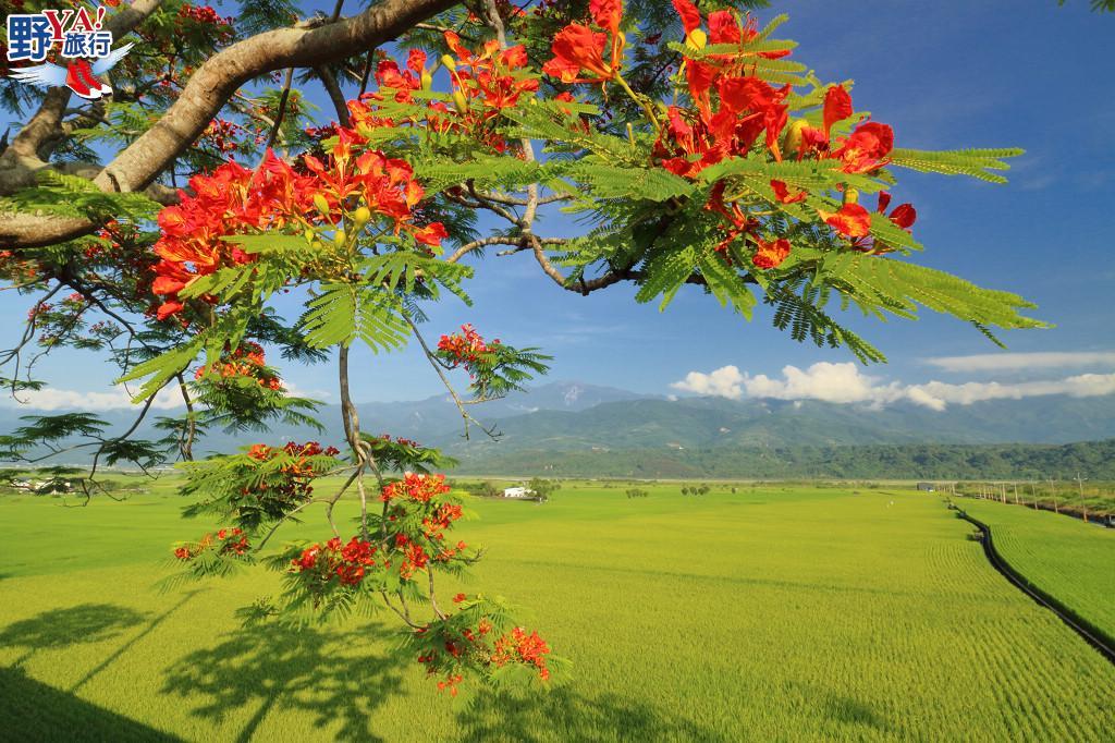 花蓮最浪漫的景觀公路 夏日193線黃綠紅繽紛登場 @YA 野旅行-旅行不需要理由