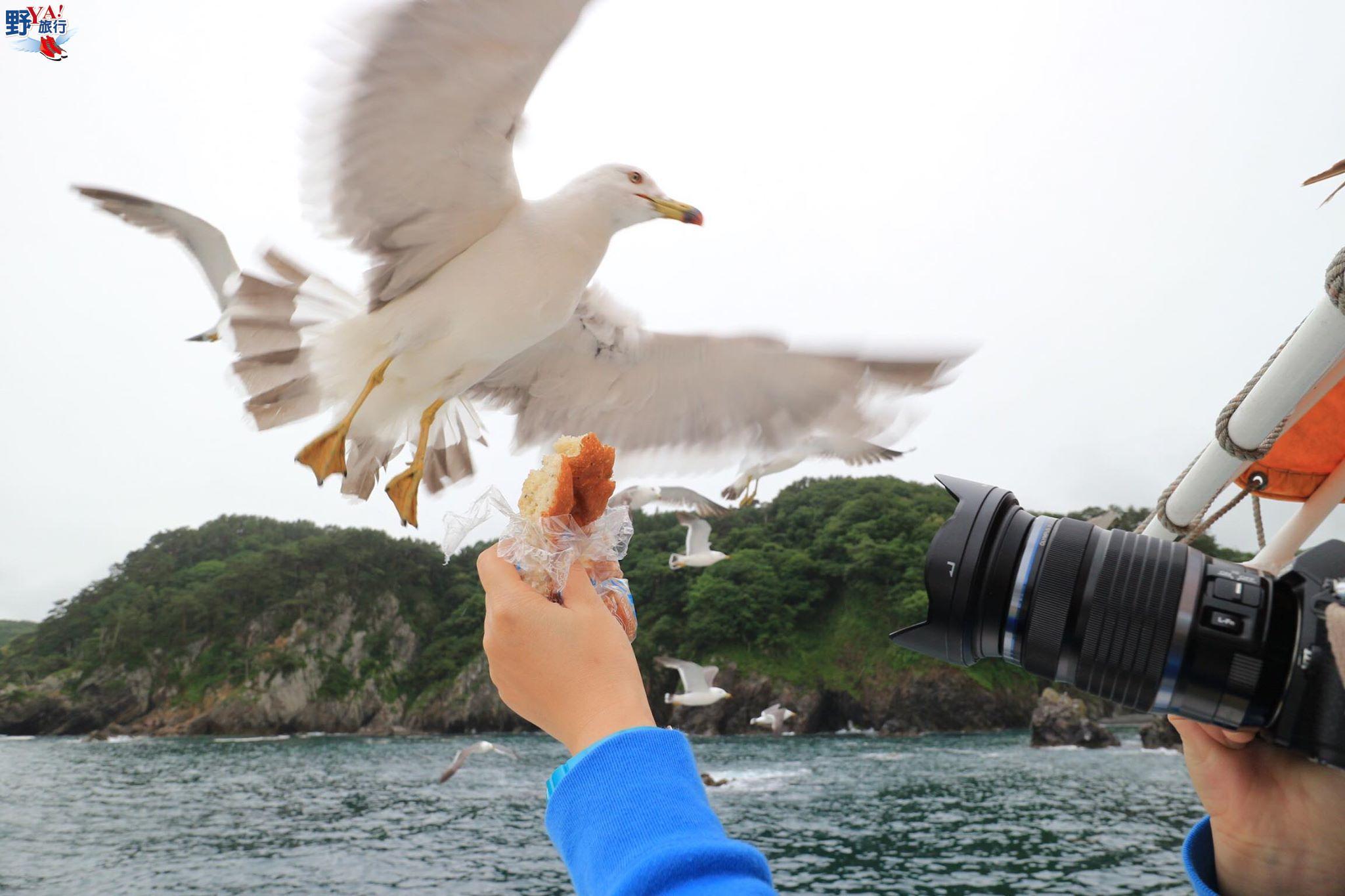 岩手、宮古|淨土之濱 搭船餵海鷗飽覽海岸風光 @YA 野旅行-旅行不需要理由