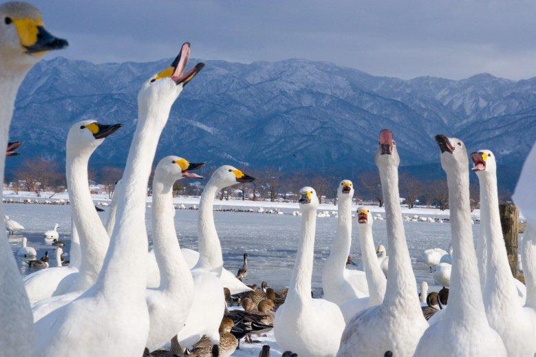 日本 新潟 越後雪國魅力無限 冬日必玩行程看這裡 @YA 野旅行-旅行不需要理由