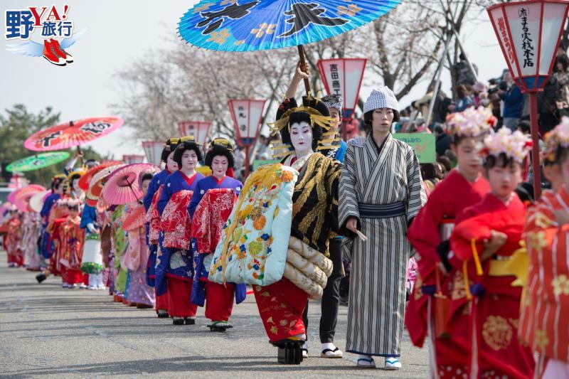 日本 新潟 四月春櫻繽紛絢爛 高田城百萬櫻花會 @YA 野旅行-旅行不需要理由