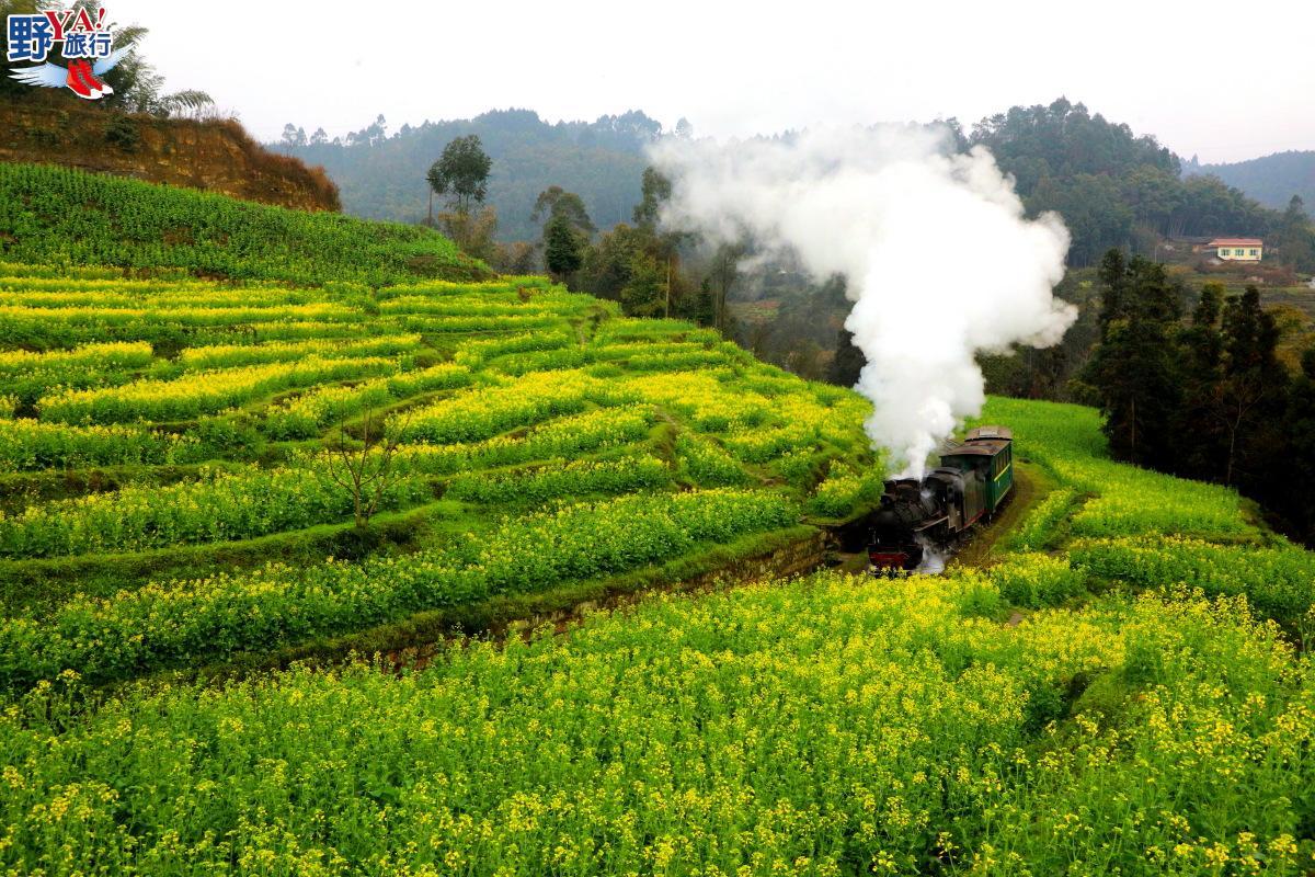 中國|四川 陽春三月花海小火車 工業革命時代的活化石 @YA 野旅行-旅行不需要理由
