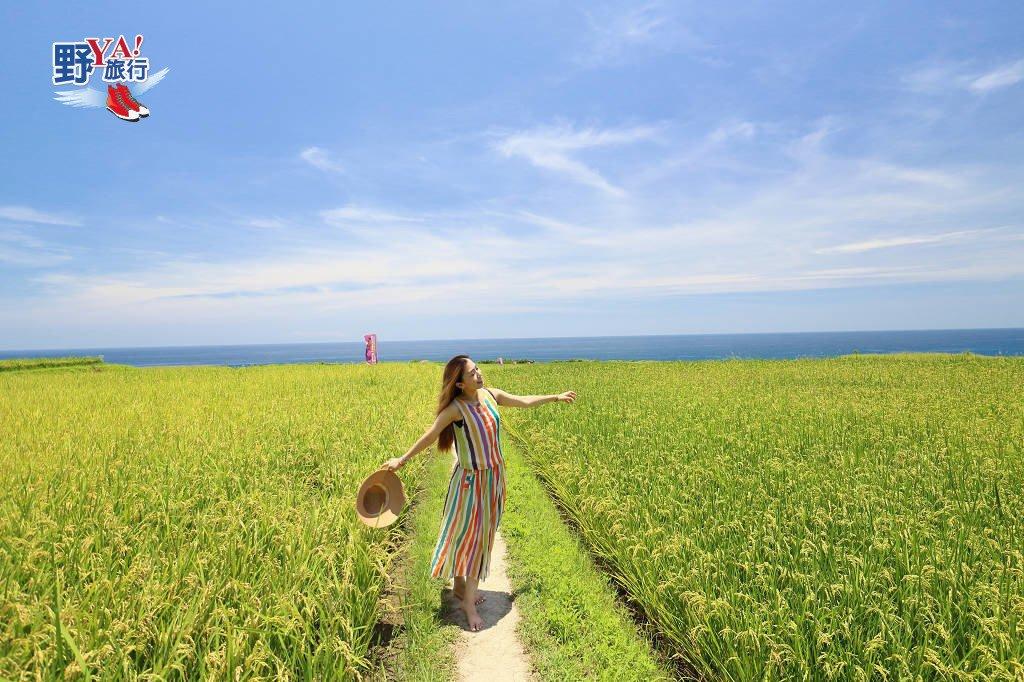 【新社梯田】超夯IG熱點 太平洋左岸的海稻田 @YA 野旅行-旅行不需要理由