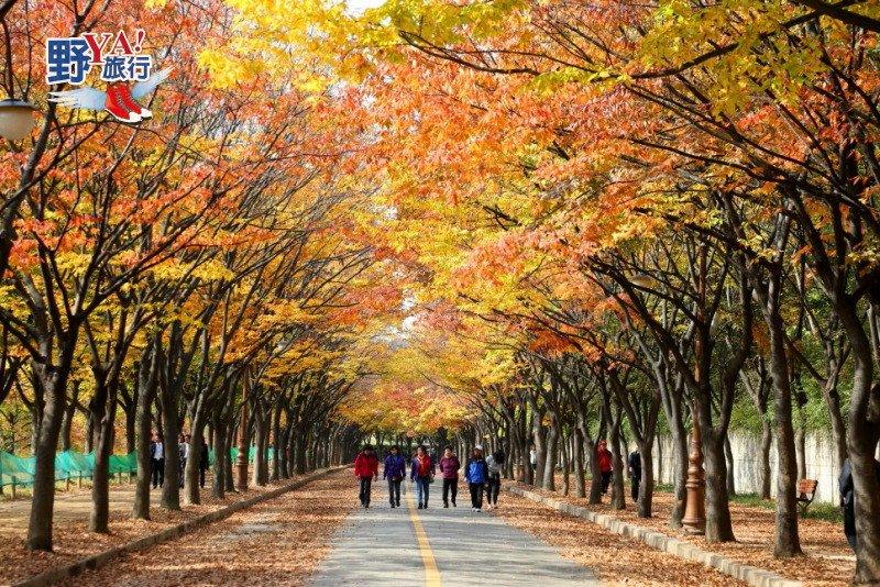 韓國楓紅預測出爐 計畫到韓國賞楓趁現在 @YA 野旅行-旅行不需要理由