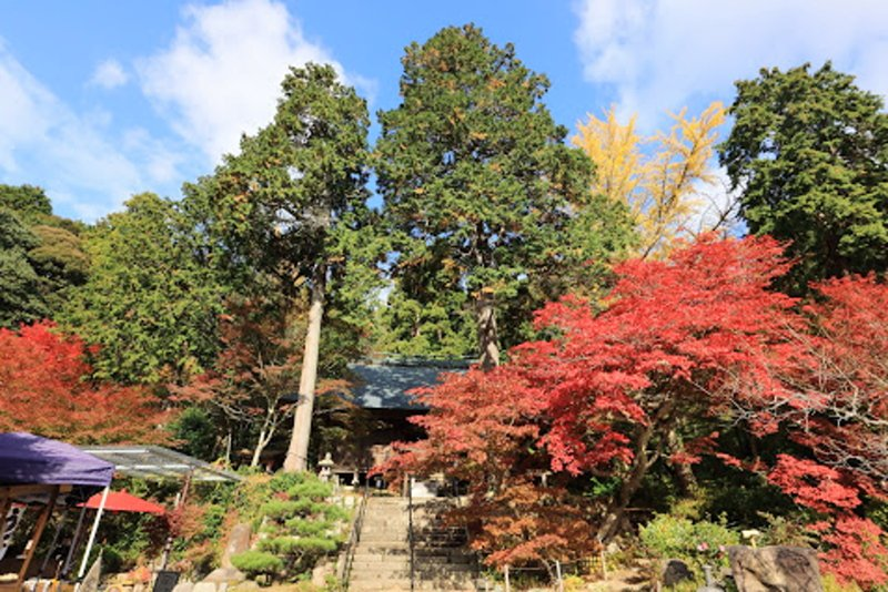 浪漫的季節唯美的情境,丹波篠山楓紅片片 @YA 野旅行-旅行不需要理由