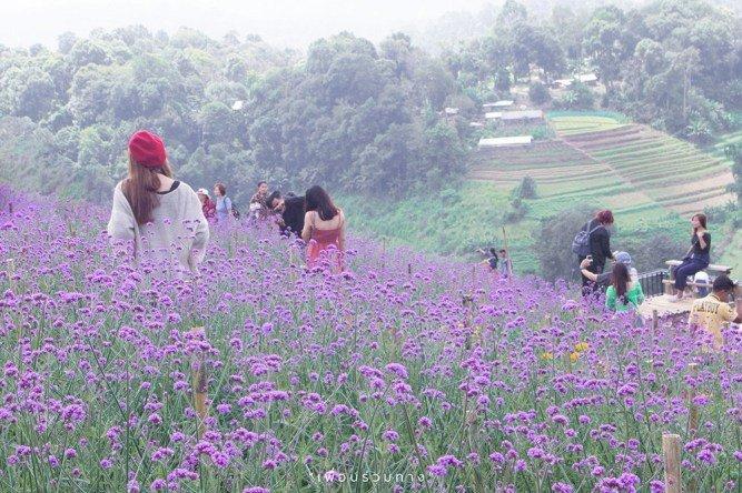 泰國清邁百花盛開 三座美麗花園農場競相爭豔 @YA 野旅行-旅行不需要理由