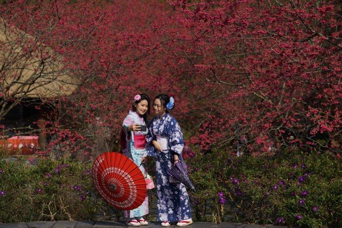 預約2020浪漫春櫻 九族文化村歡樂無限大 @YA 野旅行-旅行不需要理由