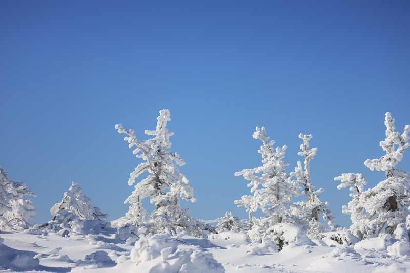 山形藏王雪季限定!藍天的藏王樹冰真是太美了 @YA 野旅行-旅行不需要理由