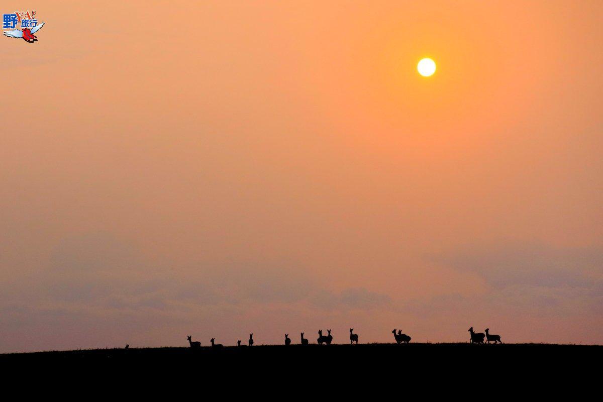 龍磐草原找尋梅花鹿 台26線海岸曠野寄情 @YA 野旅行-旅行不需要理由