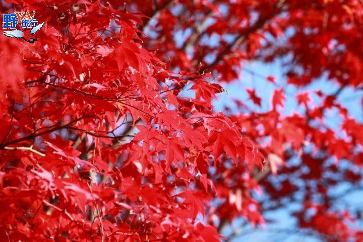 想念日本紅葉了嗎?東武鐵道沿線賞楓秘境報你知 @YA 野旅行-旅行不需要理由