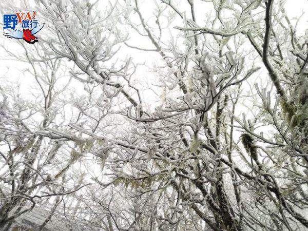 急凍!太平山一夜雪白 夢幻霧淞森林美翻了 @YA 野旅行-旅行不需要理由