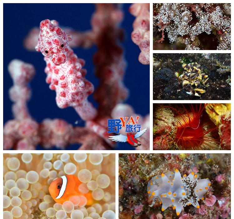 海底忙什麼-東管處東海岸及綠島海域潛點探勘 @YA 野旅行-旅行不需要理由