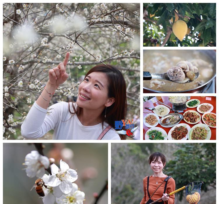 台南賞梅採果品嚐梅子料理 楠西梅嶺即將迎來梅花盛開期 @YA 野旅行-旅行不需要理由